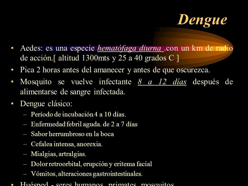 Dengue Aedes: es una especie hematófaga diurna .con un km de radio de acción.[ altitud 1300mts y 25 a 40 grados C ]